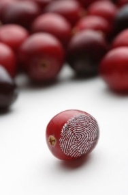 Cran-Fingerprint